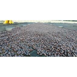 Séchage des grains avec la cerise de caféier