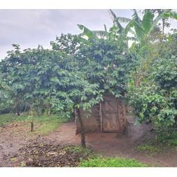 Ferme typique de la région des Rwenzori